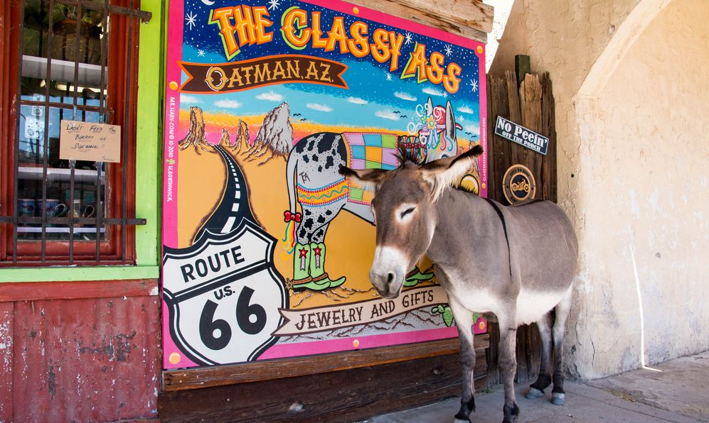 animals Route 66