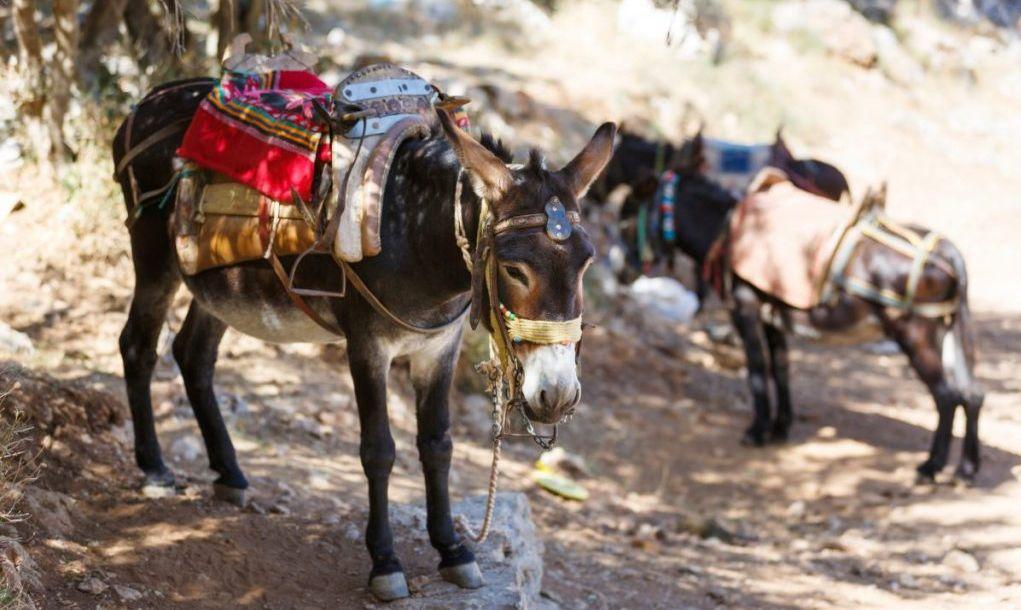 crete donkeys