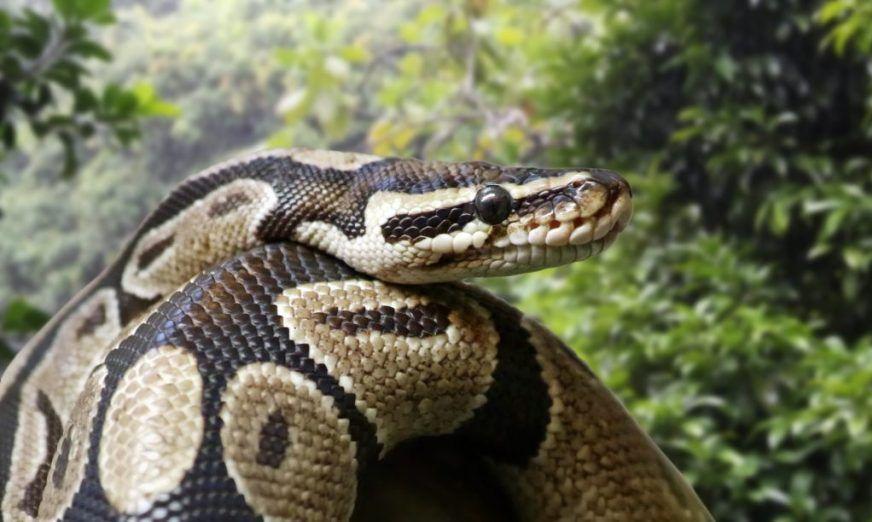 temple python ouidah