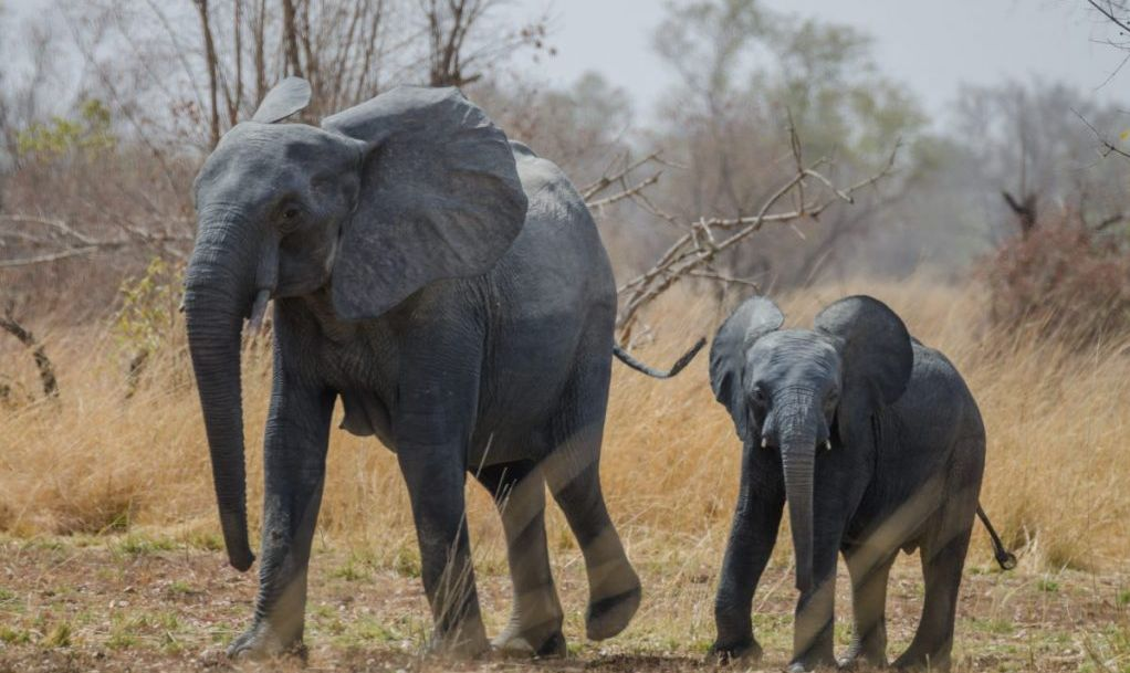pendjari national park elephant benin