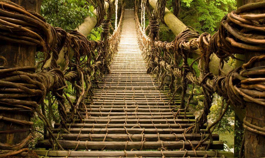 Vine Bridge