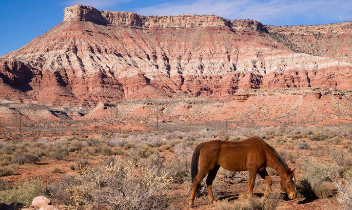 Zion horseback