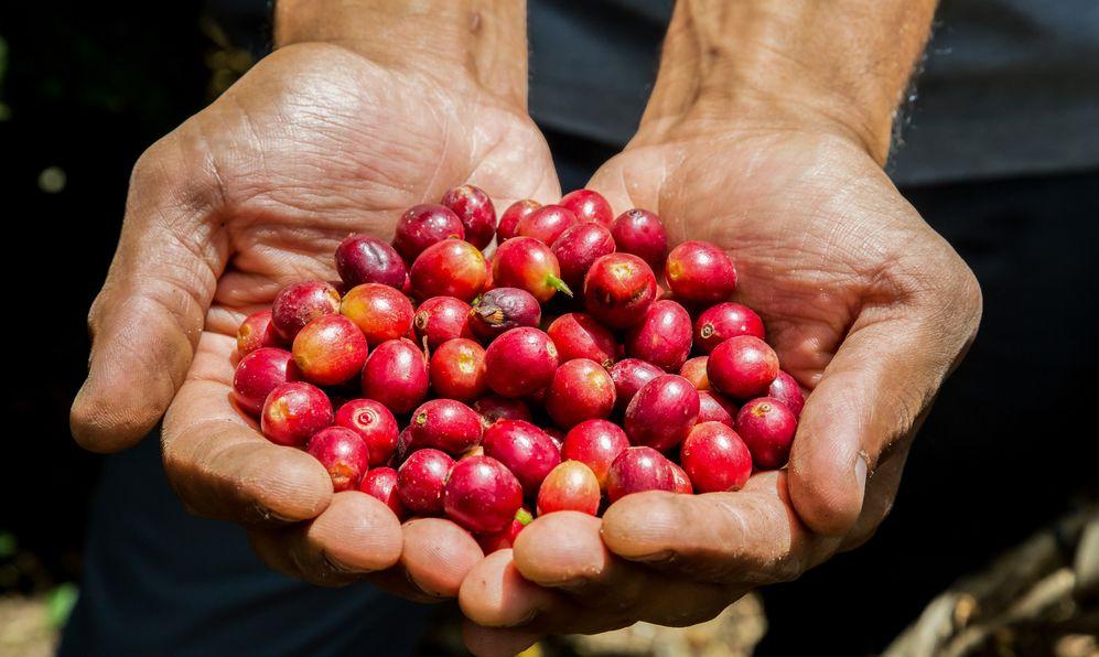 coffee tour Costa Rica