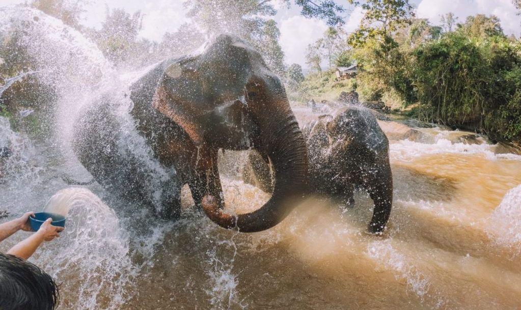 elephant bathe chiang mai