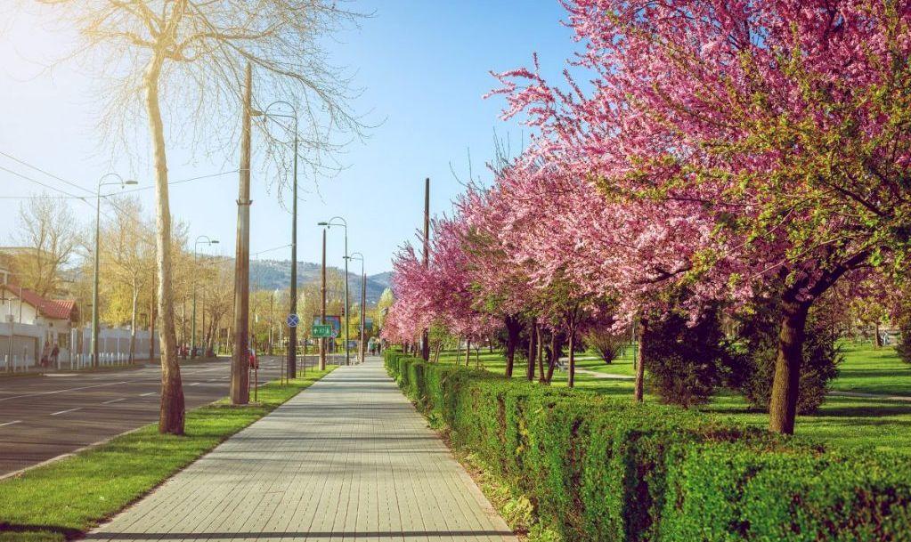 sarajevo park green