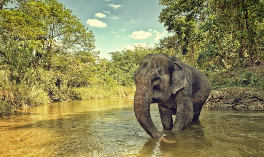 An elephant in Thailand