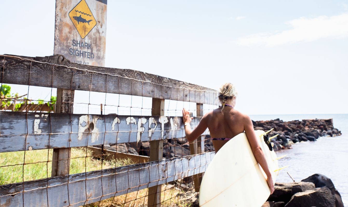 Signs warn about shark sightings along the beach as a surfer watches the surf.