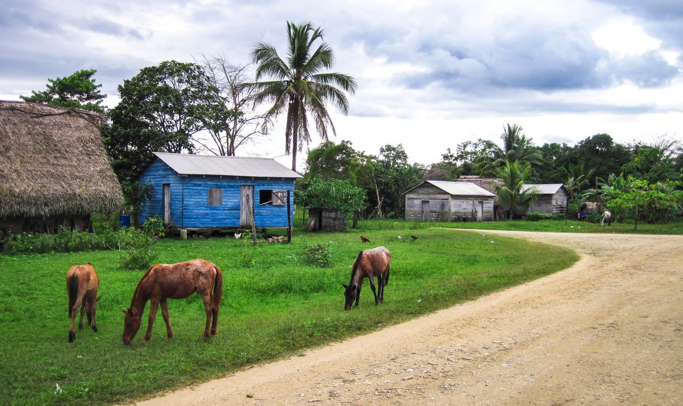 Horses graze in a grassy field in a very remote village in southern Belize.