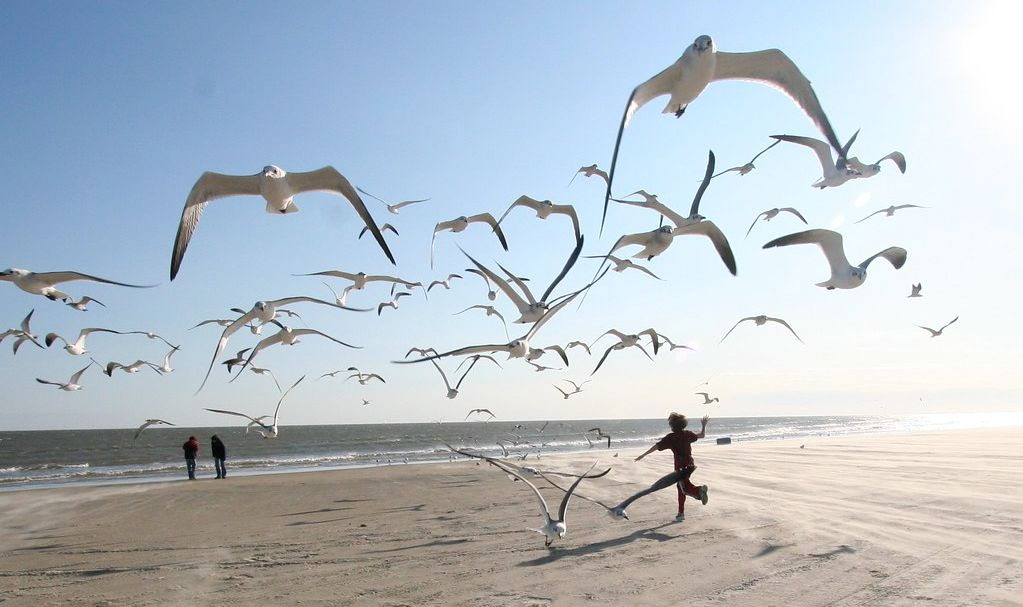 Running on the beach in the middle of the flying birds in Galveston