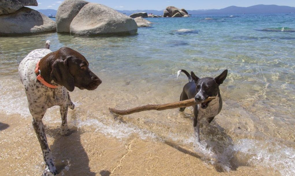 dogs Lake Tahoe beach