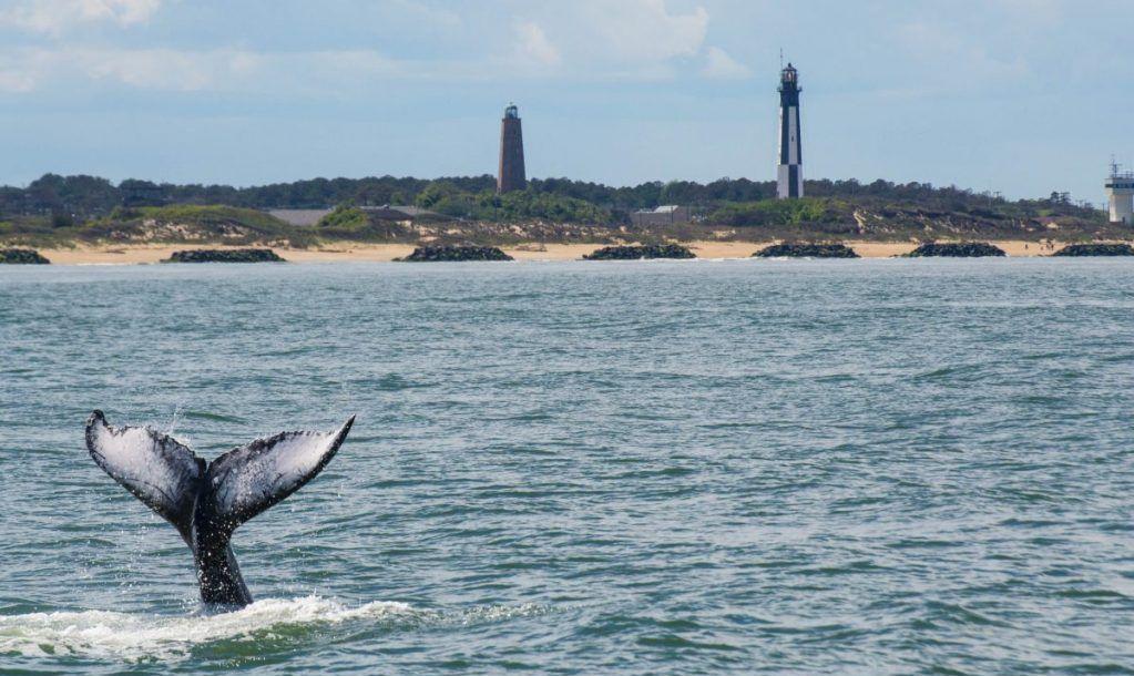 whale beach ocean