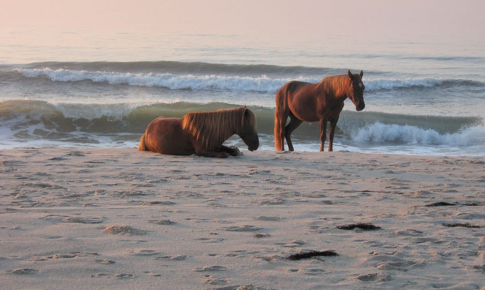 Assateague Island Virginia