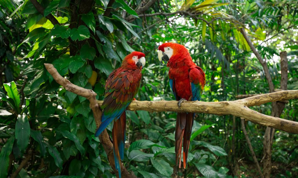 Parrots - Jungle Island, Miami, Florida