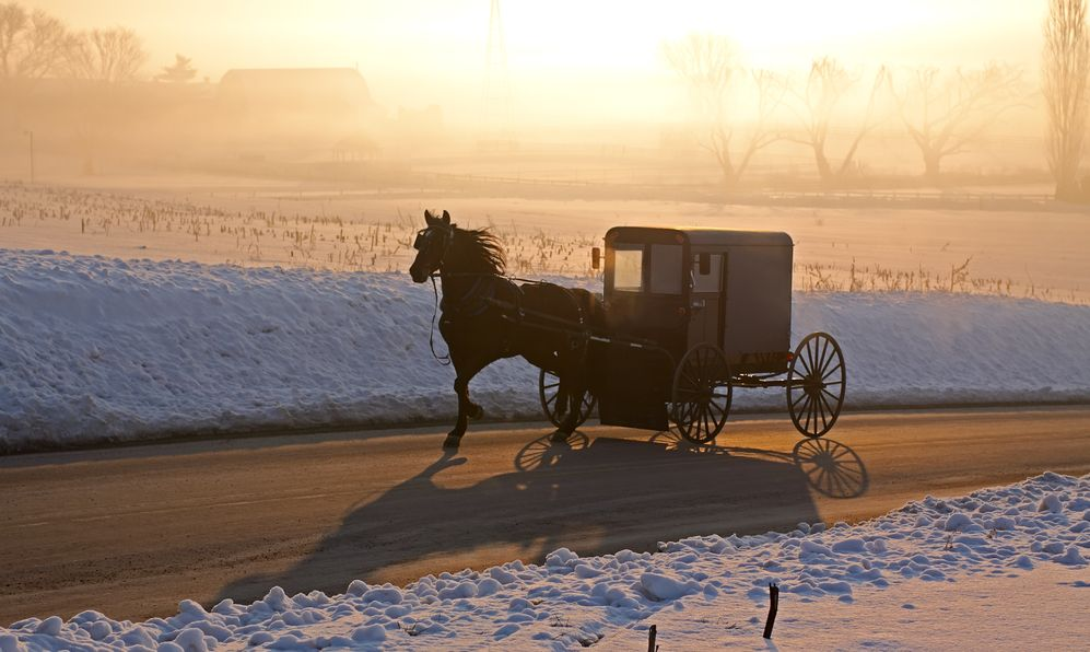 Amish carriage in morning fog, Lancaster County, Pennsylvania