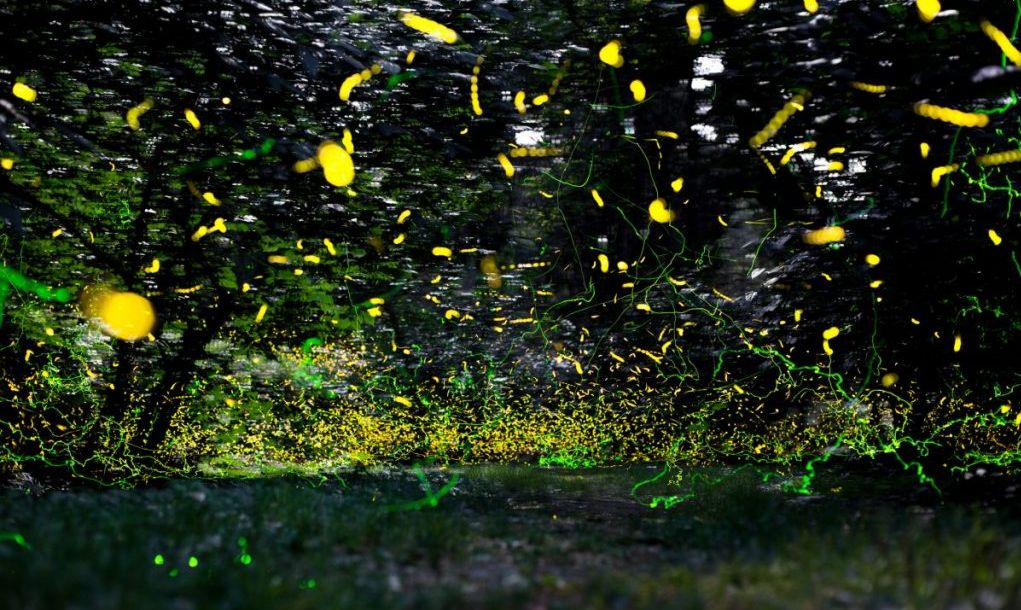 fireflies in the woods