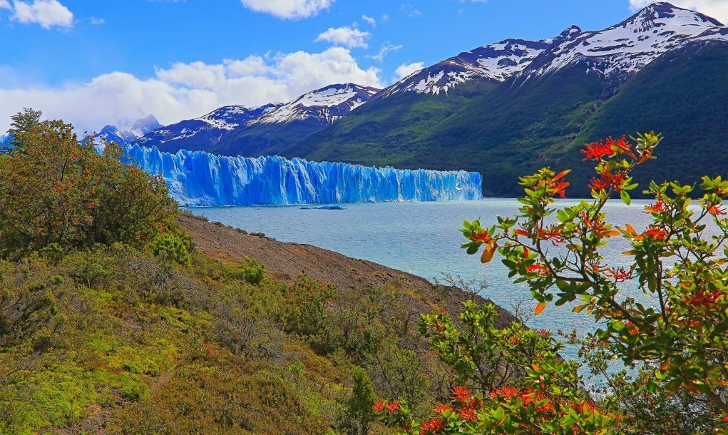 Perito Moreno Glacier and red wildflowers, Lake Argentino – El Calafate, Patagonia Argentina