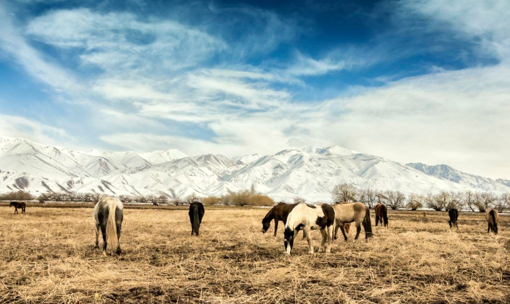 Horses breeding in Argentinean Patagonia. Neuquen, Argentina.