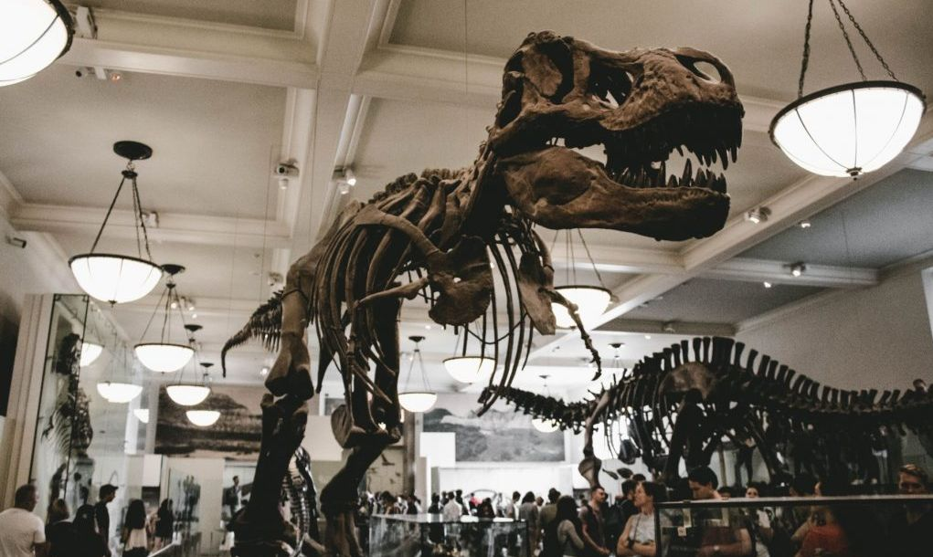 American Museum of Natural History, New York, United States