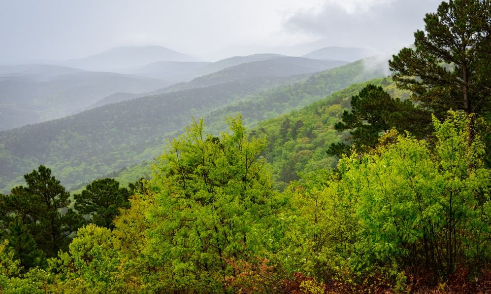 Grey skies over Ouachita National Forest during the day