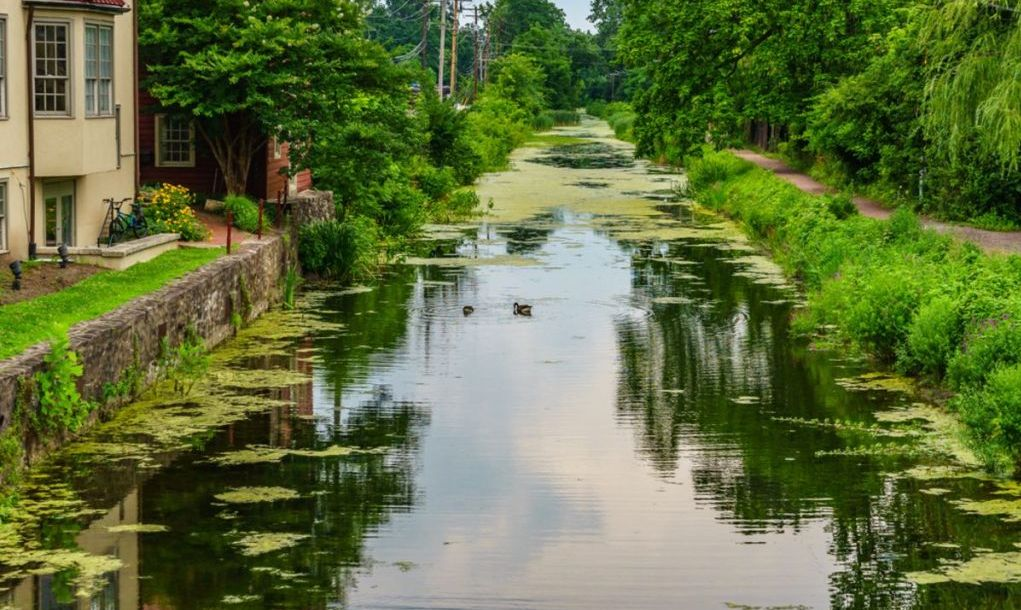 Delaware Canal Towpath and goose, Historic New Hope, PA