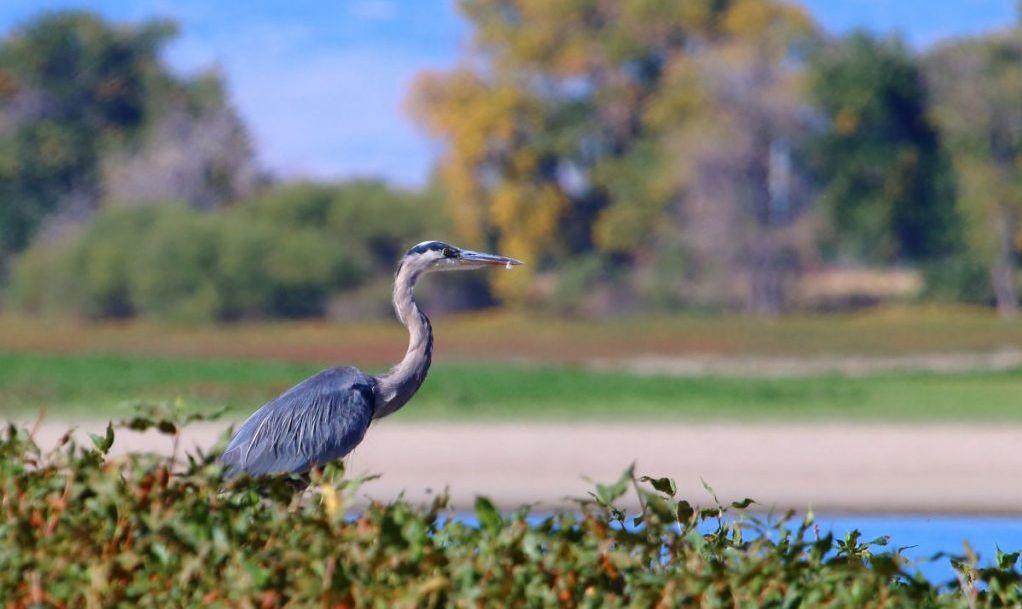 Barr Lake Birding