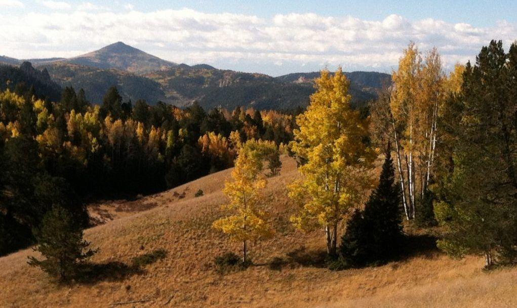 Mueller Trees Autumn