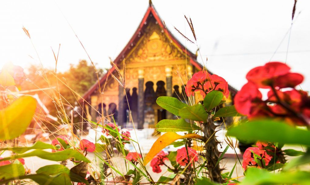 Stunning view of some Dok Champa laos national flowers in the foreground and the blurred Wat Mahathat in the background. Luang Prabang, Laos.