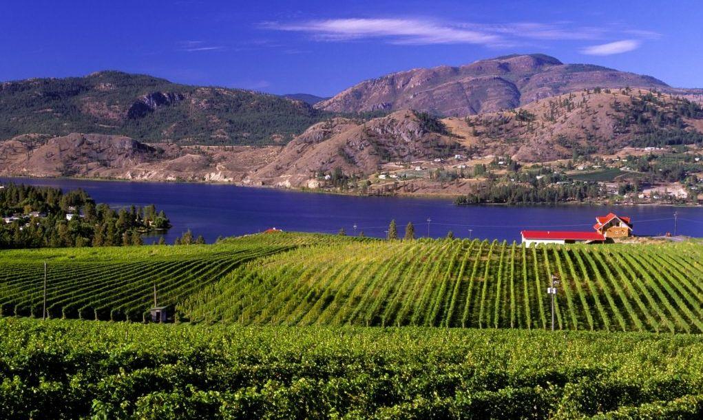 vineyard on skaha lake located in the okanagan near penticton