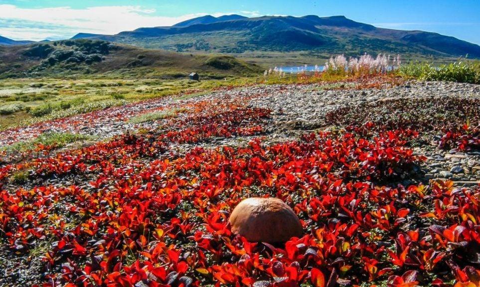 Nome Mushroom Fields