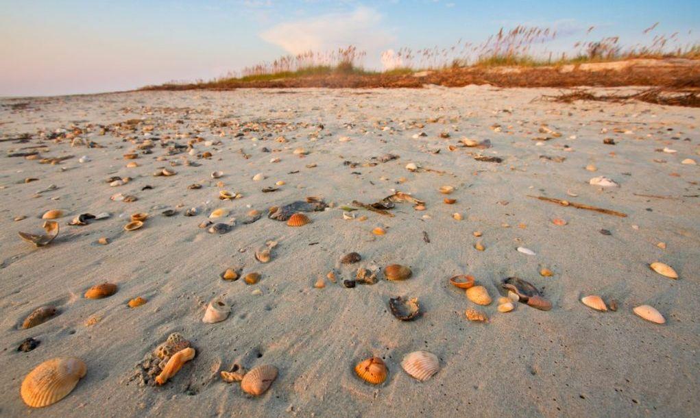 Pawley's Island Shells