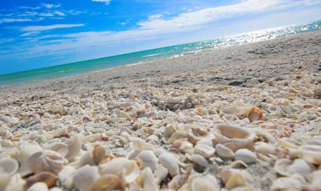 sanibel florida beach with sea shells at an angle