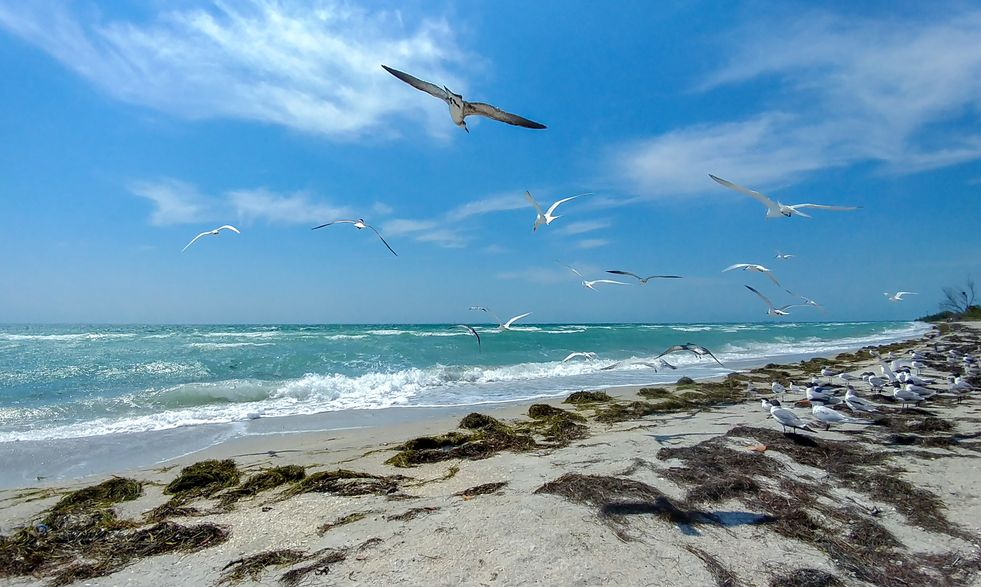 Seagulls flying over the beach in Fort de Soto Park beach, Tampa, Florida