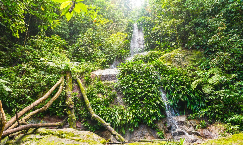 El Imposible Forest National Park, El Salvador