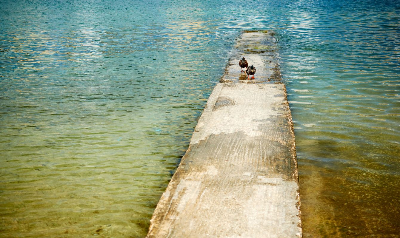 Two ducks on the pier on Manoel Island Malta