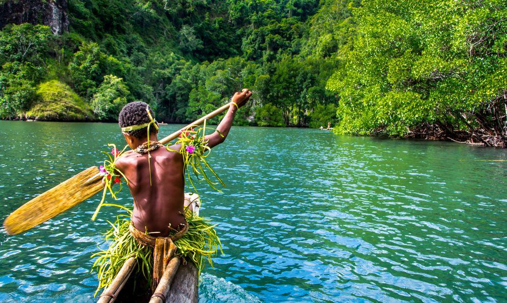 natural green jungle with mangrove trees background, Melanesia, Papua New Guinea, Tufi