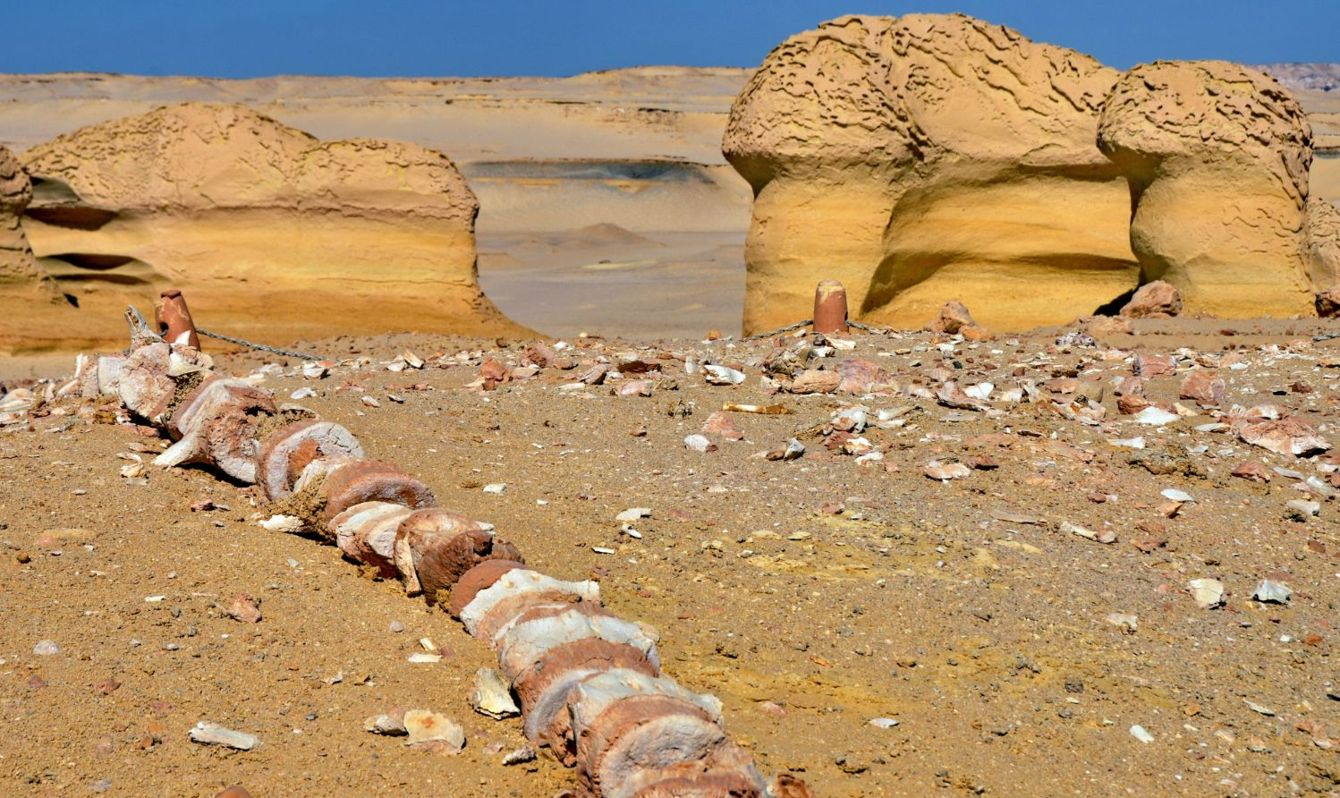 Wadi al-Hitan, the valley of fossilized whales in Egypt