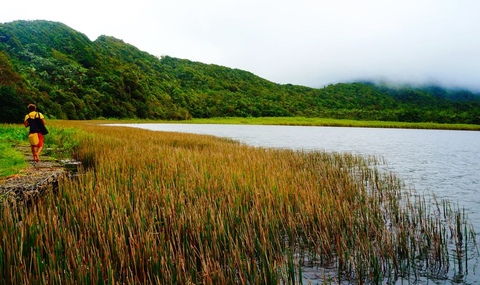 Lake at Grand Etang National Park, Grenada, Caribbean Island