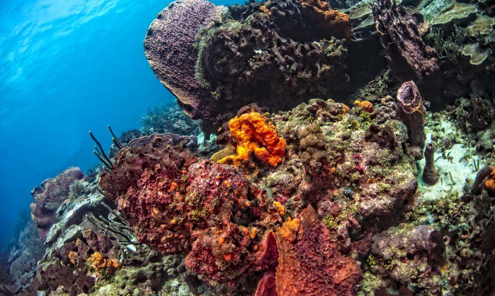 Barrel, elephant ear and tube sponges galore