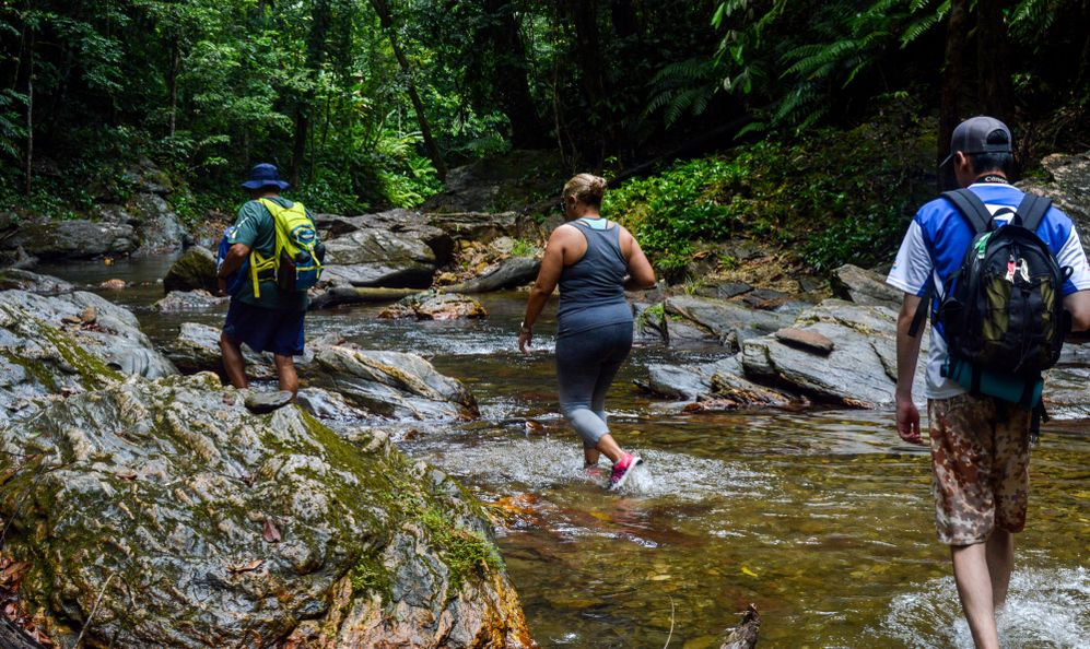 Three hikers making their way across a slow moving, rocky river in the jungle.