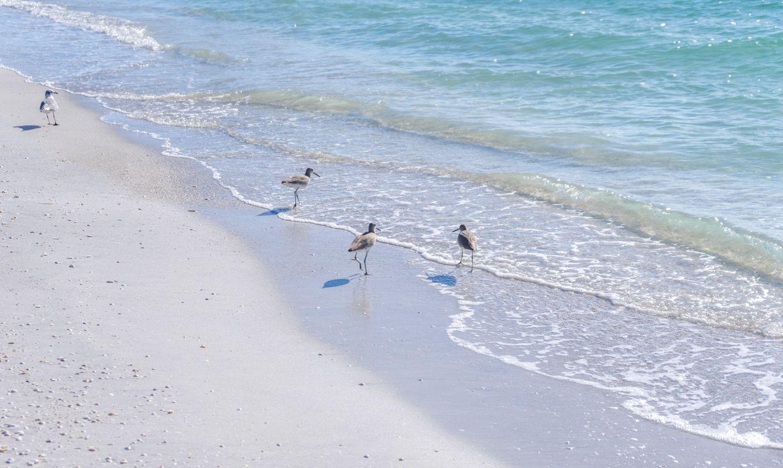 Cayo Costa, Florida, USA
