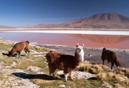 Reawaken Your Soul in Bolivia