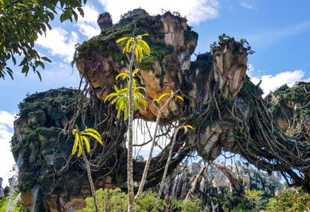Top 10 Attractions at Animal Kingdom Disney World