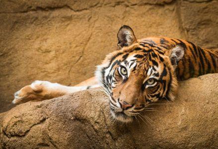 Top 10 Countdown: Popular Attractions at Disney's Animal Kingdom