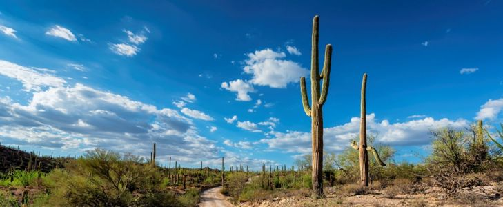 Unique Things to do in Tucson