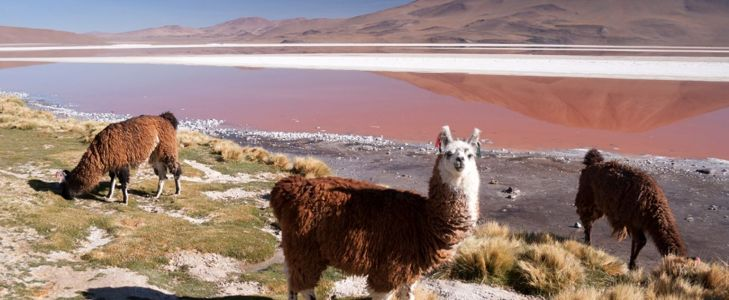 Reawaken Your Soul in Bolivia