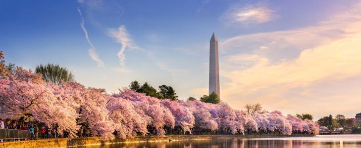 10 Best Things to Do in Washington D.C.