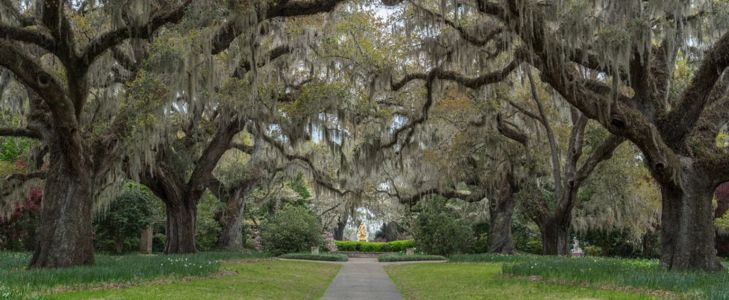 Must-See Spots in South Carolina