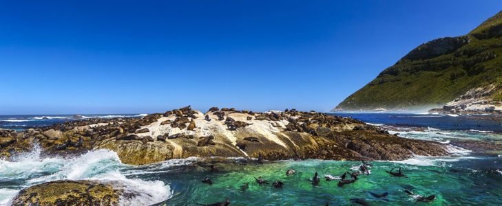 The Best Places to Visit in Cape Town