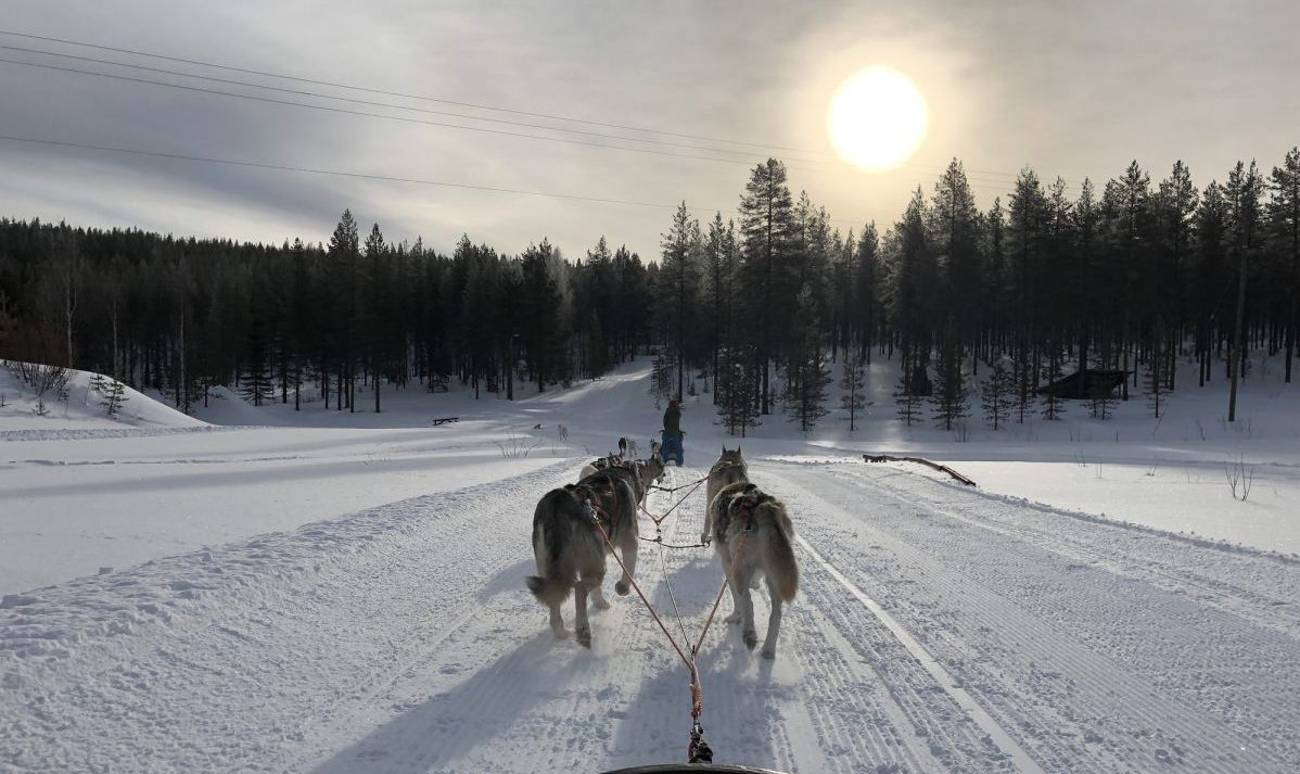 Finland dog sled