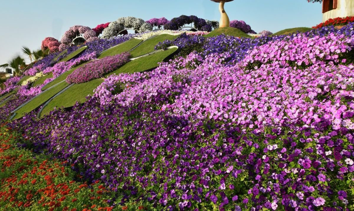 Flowers Matt at the Dubai Miracle garden,Dubai, UAE